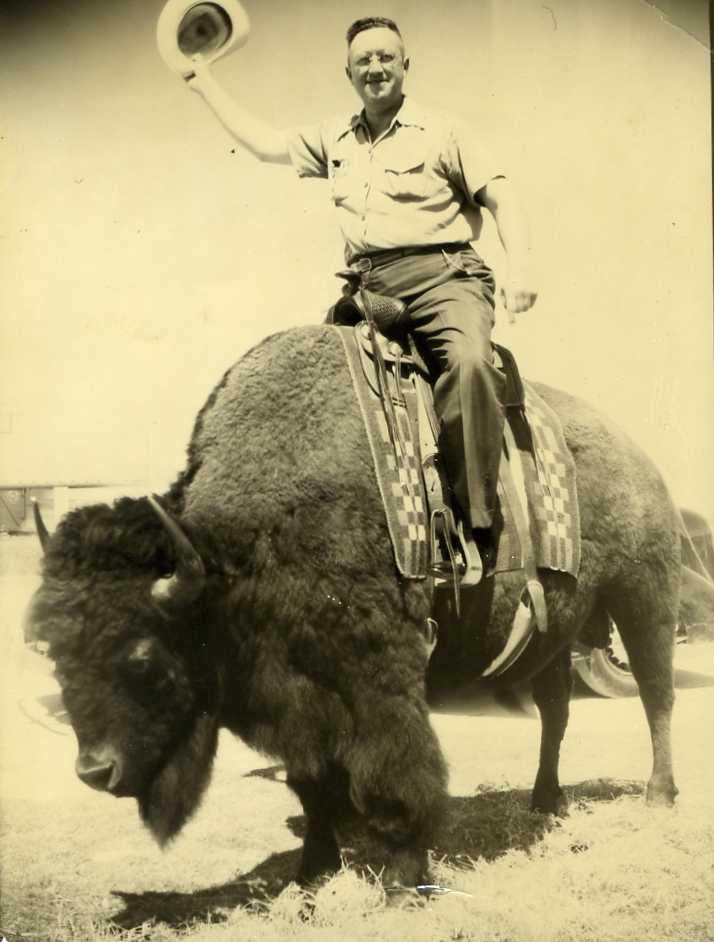 Big Daddy on a Buffalo